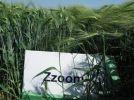 ZZOOM_1.jpg