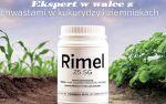 rimel_1.jpg