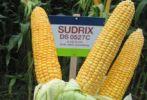 sudrix12.jpg
