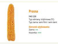 Nasiona kukurydzy Prosna 220 FAO