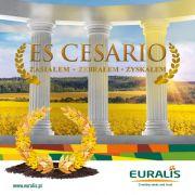 Rzepak ozimy ES CESARIO 1,5 mln EURALIS - nasiona rzepaku