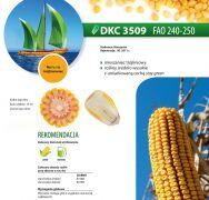 Nasiona kukurydzy DKC 3509 (FAO 240-250)