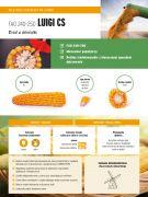 Nasiona kukurydzy Luigi CS (FAO 240-250)