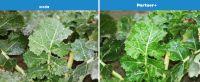Partner +  1l  Adiuwant do łącznego stosowania z cieczą użytkową środków ochrony roślin  NOWOŚĆ