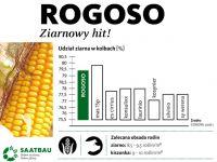 Nasiona kukurydzy ROGOSO FAO 210-220 SAATBAU ZIARNOWY HIT