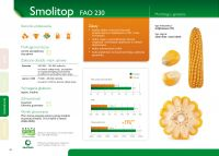 Nasiona kukurydzy SMOLITOP - (FAO 230-240)