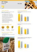 Nasiona kukurydzy SY Telias  (FAO 250) Najlepsza na ziarno