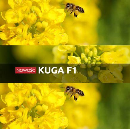 Rzepak ozimy KUGA F1 1,5 mln Rapool NPZ - nasiona rzepaku  Za