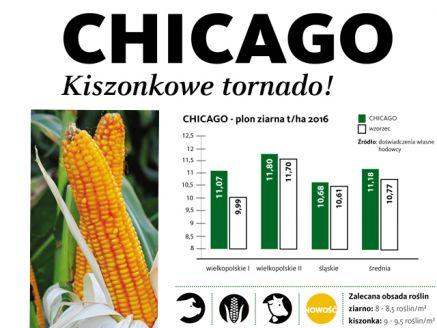 Nasiona kukurydzy CHICAGO FAO 250 SAATBAU ZIARNO