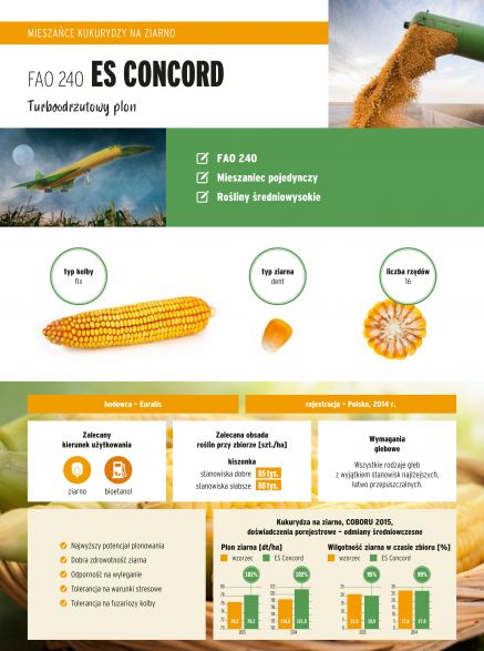 Nasiona kukurydzy ES Concord FAO 240