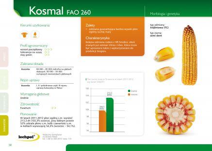 Nasiona kukurydzy KOSMAL FAO 260 SMOLICE
