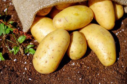 Ziemniaki Sadzeniaki BELLAROSA średnio- wczesna 50kg Ziemniaki na sadzenie